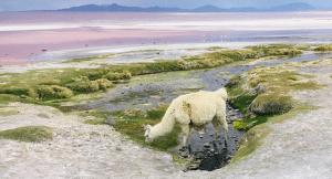 10 Tipps um Höhenkrankheit vorzubeugen (Chile, Bolivien & Peru)